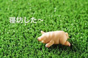 i_pig
